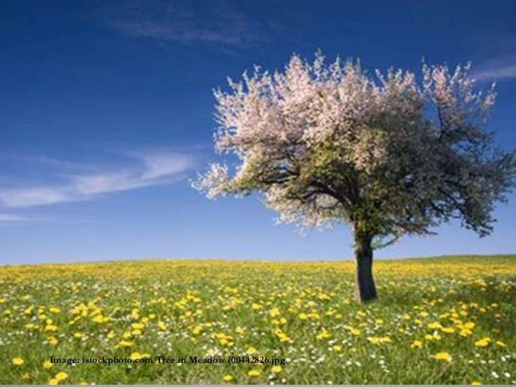 Image: istockphoto.com Tree in Meadow (00442826.jpg