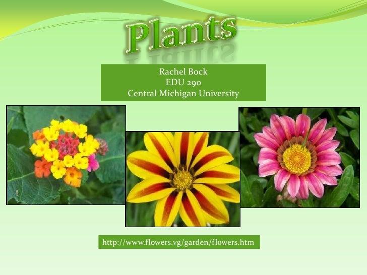 Plants<br />Rachel Bock<br />EDU 290<br />Central Michigan University<br />http://www.flowers.vg/garden/flowers.htm<br />