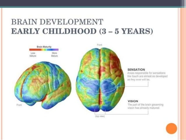 brain development and early childhood education World vision's early childhood development  why invest in early childhood development a child's brain grows  early childhood development: the education.