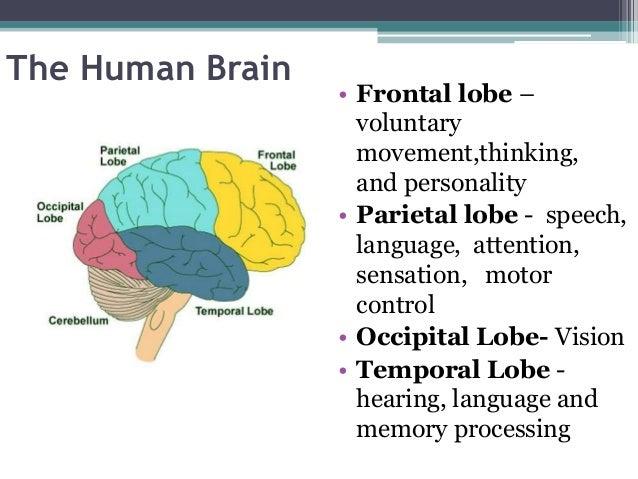 Education 1 : Brain development