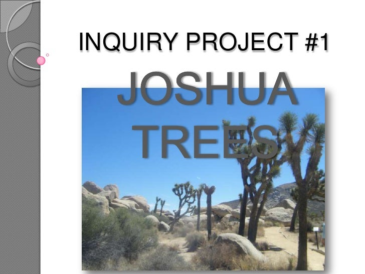 INQUIRY PROJECT #1<br />JOSHUA TREES <br />