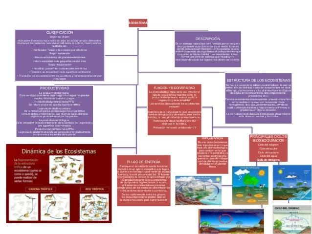 Mapa Conceptual Ecosistema