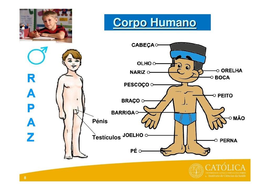 Corpo Humano    Pénis    Testículos8