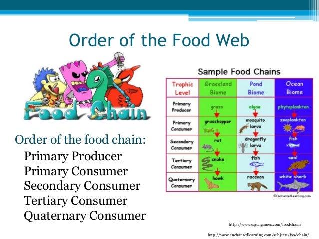 Education311 ids slidesharefoodchain.doc Quaternary Consumer Examples