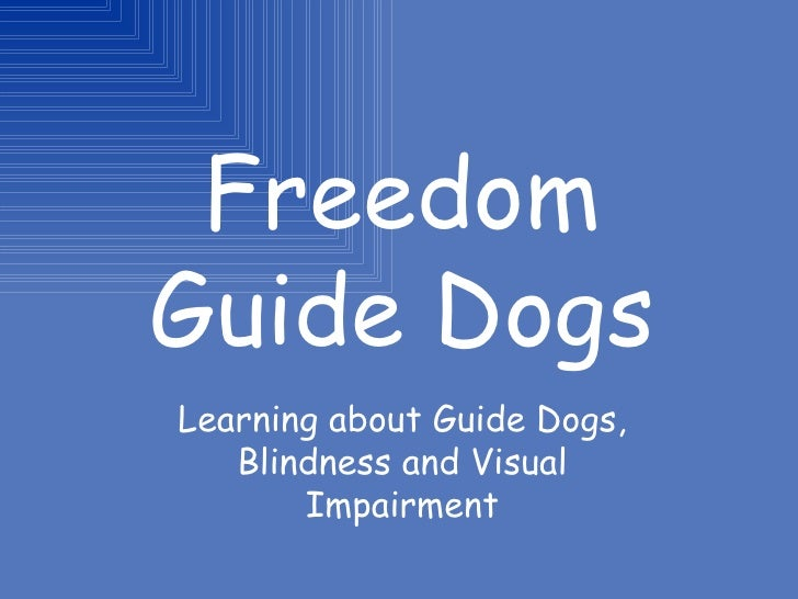 Freedom Guide Dogs Learning about Guide Dogs, Blindness and Visual Impairment