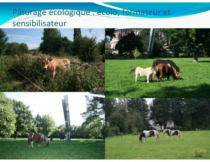 Pâturage écologique : écolo, formateur etsensibilisateur            N. Hautekèete                   13