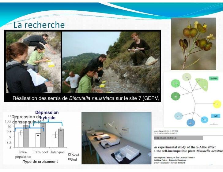 La rechercheRéalisation des semis de Biscutella neustriaca sur le site 7 (GEPV,CREN)          DépressionDépression de     ...