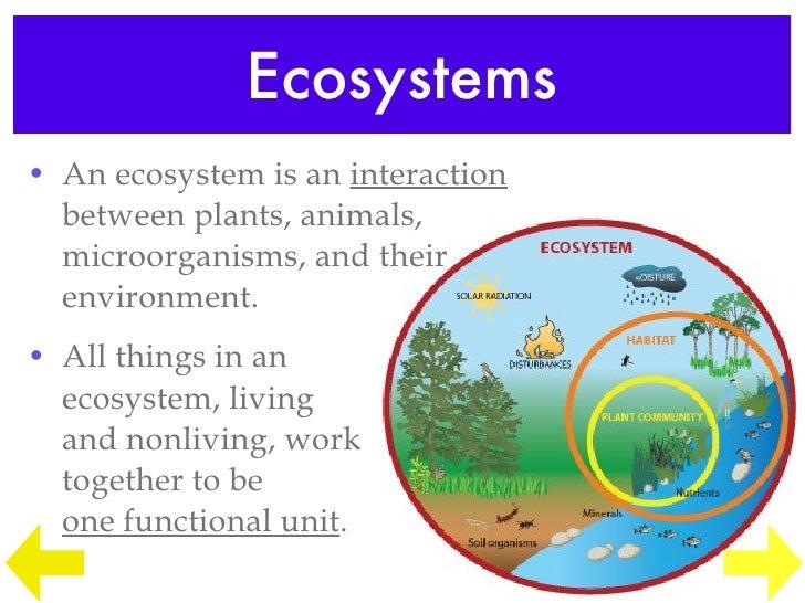Edu 290 Ecosystem Lesson