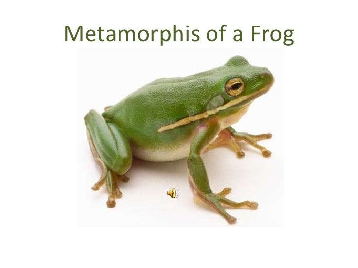 Metamorphis of a Frog<br />