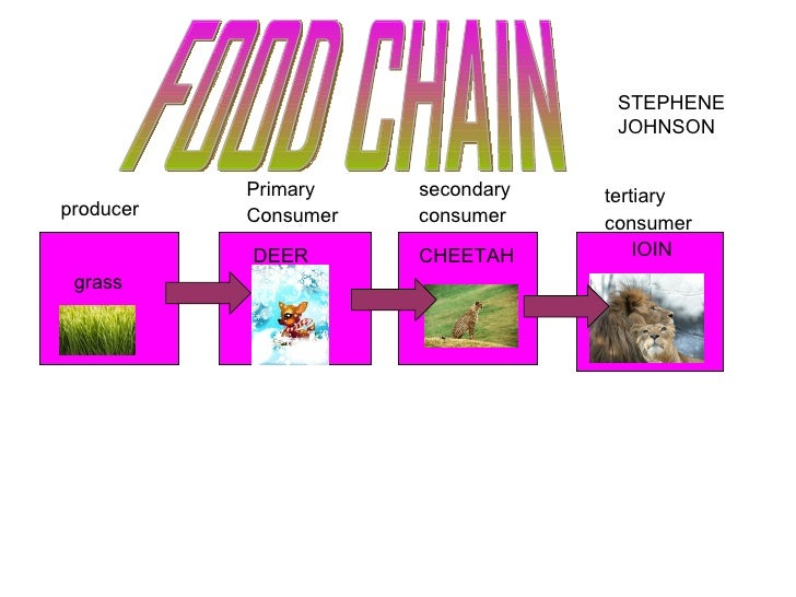 STEPHENE JOHNSON grass producer Primary Consumer secondary consumer tertiary consumer FOOD CHAIN CHEETAH IOIN DEER