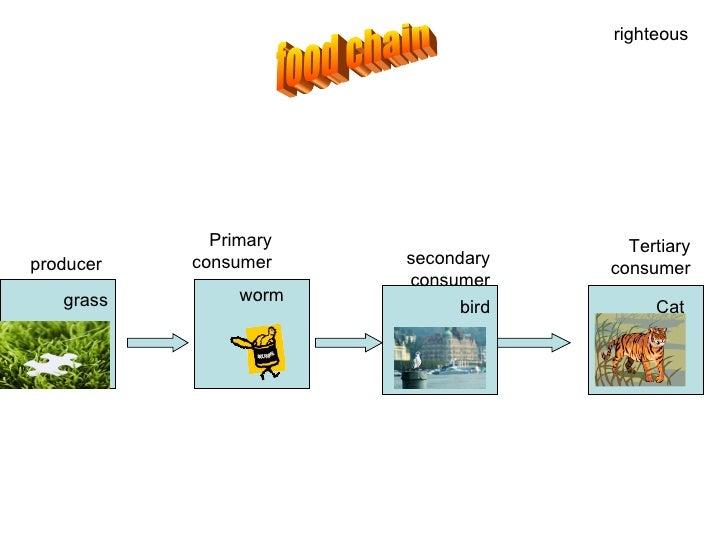 Image Gallery komodo dragon food chain