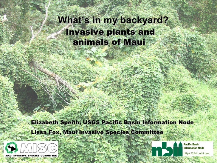 Invasive plants and animals of Maui   Elizabeth Speith, USGS Pacific Basin Information Node Lissa Fox, Maui Invasive Speci...