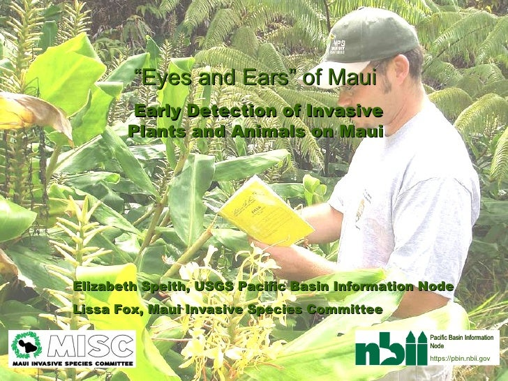 """"""" Eyes and Ears"""" of Maui  Early Detection of Invasive Plants and Animals on Maui   Elizabeth Speith, USGS Pacific Basin In..."""