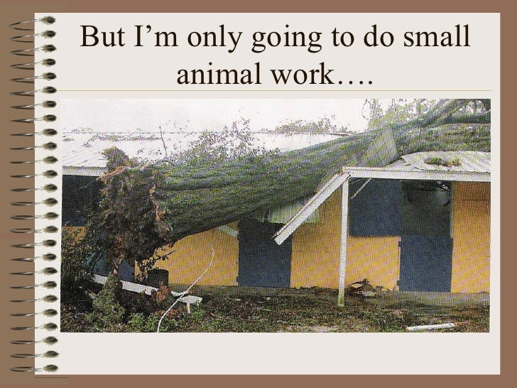 But I'm only going to do small        animal work….