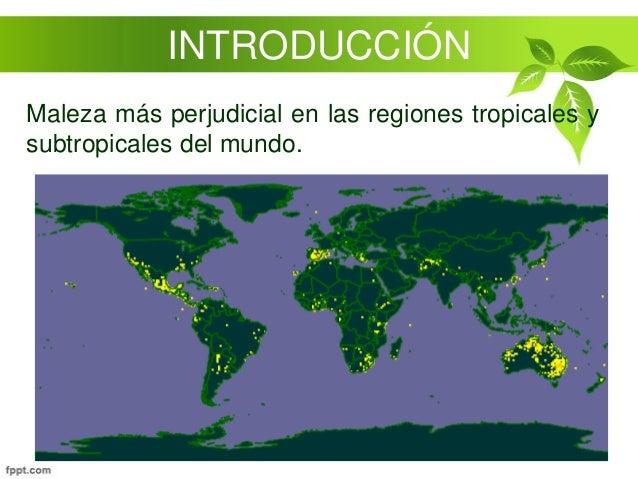 Efecto de la baja temperatura en la reproducci n del for Alelopatia en hortalizas
