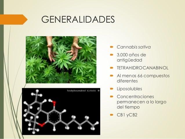 Efectos adversos de la marihuana
