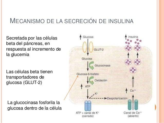 Efectos de la insulina sobre el metabolismo de