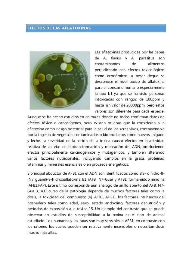EFECTOS DE LAS AFLATOXINAS  Las aflatoxinas producidas por las cepas de  A.  flavus  y  contaminantes  A. de  parasitus  s...
