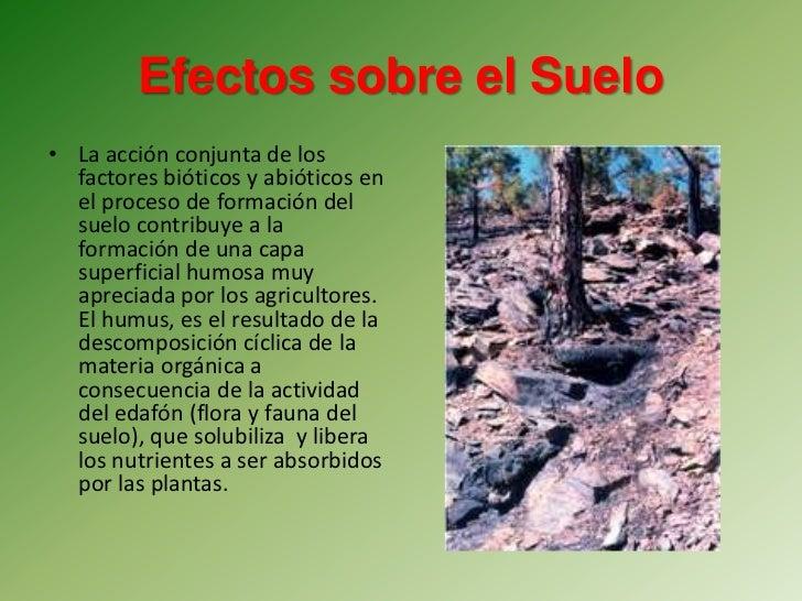 Efectos del fuego for Informacion sobre el suelo