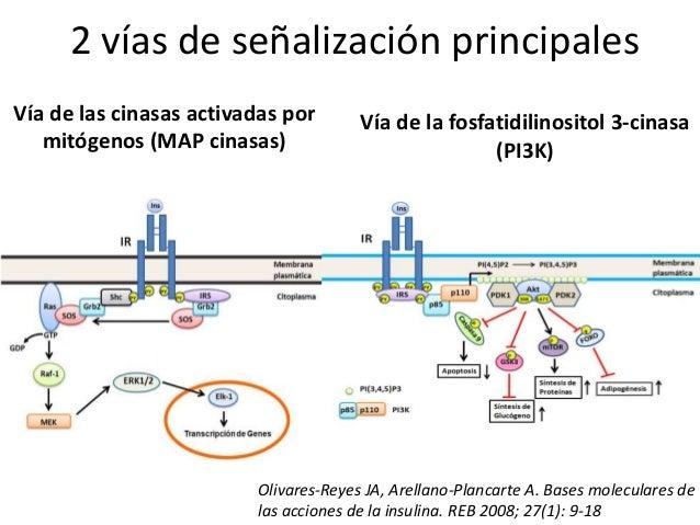 ruta anabolica del ciclo metabolico