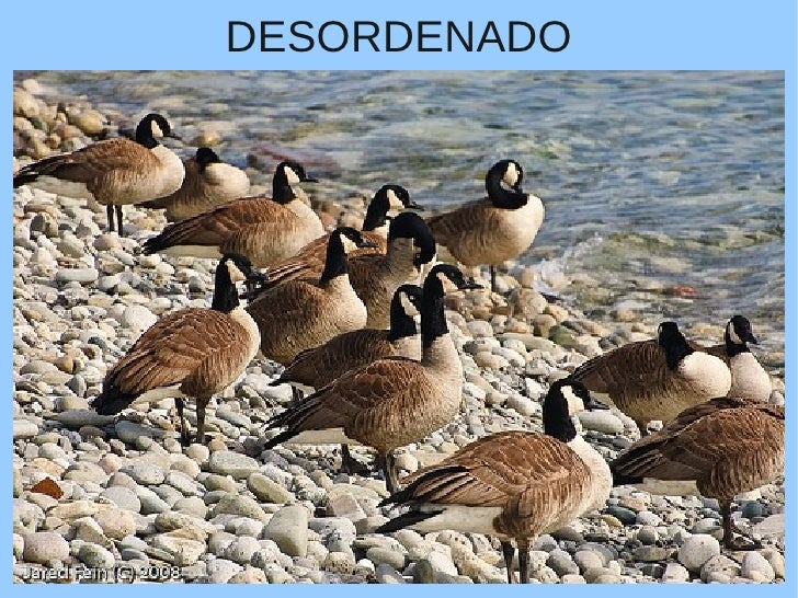 DESORDENADO