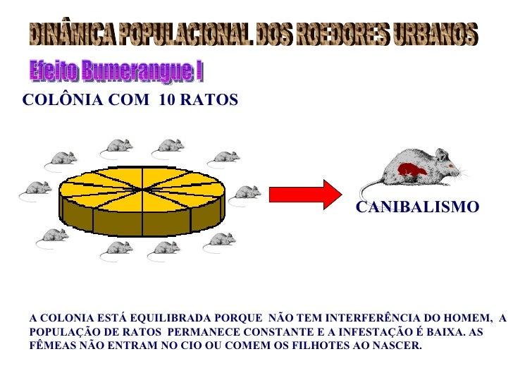 COLÔNIA COM 10 RATOS                                             CANIBALISMOA COLONIA ESTÁ EQUILIBRADA PORQUE NÃO TEM INTE...