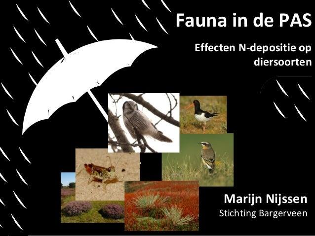 Fauna in de PAS Effecten N-depositie op diersoorten  Marijn Nijssen  Stichting Bargerveen