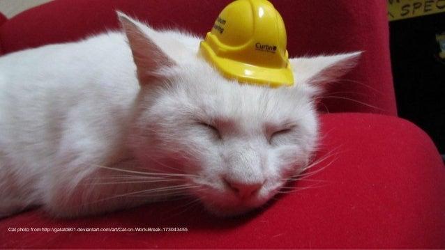 Cat photo from http://galato901.deviantart.com/art/Cat-on-Work-Break-173043455
