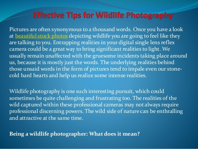 Pictures are often synonymous to a thousand words. Once you have a look at beautiful stock photos depicting wildlife you a...