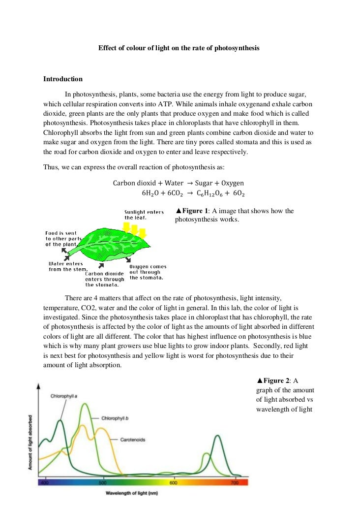 effects of photosynthesis of spinach leaves Such effects on leaves have, to the best of our knowledge, not been reported before and highlight the fundamental difference between leaf adaptation to the growth spectrum and the instantaneous spectral effect on photosynthesis.