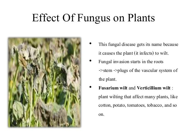 Research paper on how plants absorb