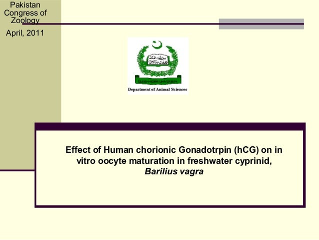 Effect of Human chorionic Gonadotrpin (hCG) on invitro oocyte maturation in freshwater cyprinid,Barilius vagraPakistanCong...