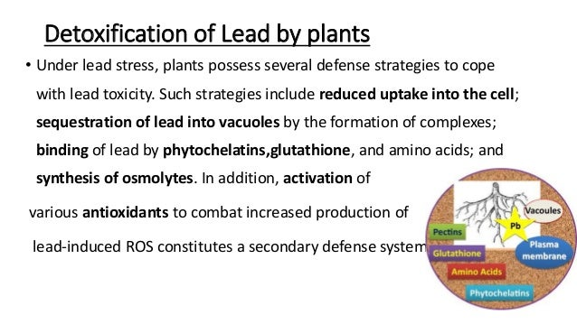 Image result for plant vacuoles absorb lead