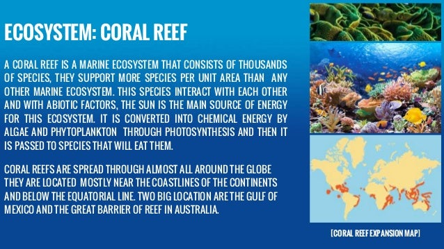 Great Barrier Reef: Can Iconic Coral System Survive After Heat Wave Kills One-Third?