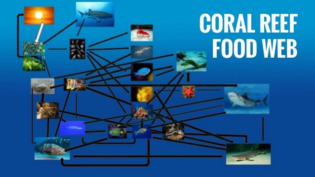 Effect of oil spills on coral reefs