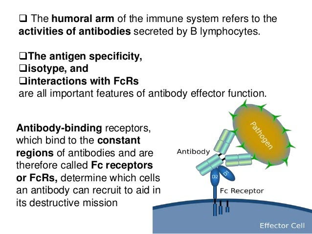 cells of the immune system and their functions pdf