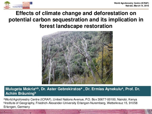 the effect of deforestation on the