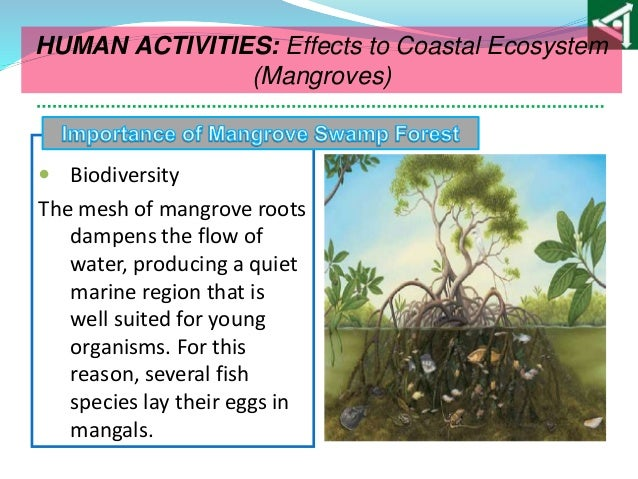 discuss the impact of human activities on Human activities can either have a negative or positive impact to the environment deforestation is an example of human activities that cause harm to the environment.