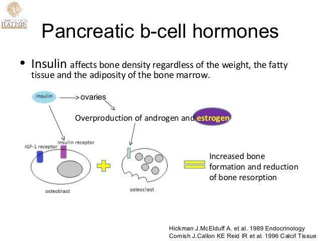 androgen and estrogen metabolism relationship to obesity