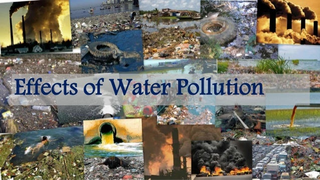 effects of sewage pollution on the environment pdf