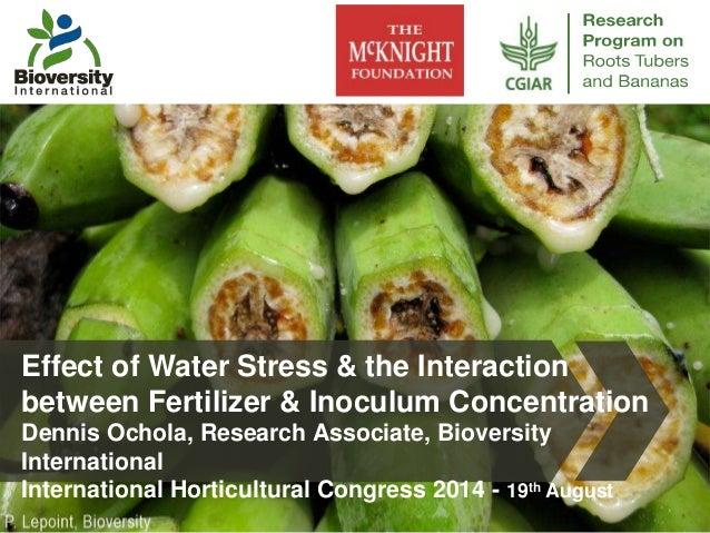 Effect of Water Stress & the Interaction  between Fertilizer & Inoculum Concentration  Dennis Ochola, Research Associate, ...