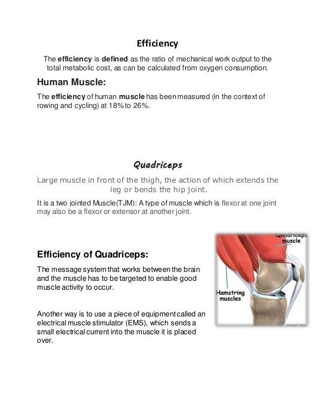 efficiency of muscle work, Muscles