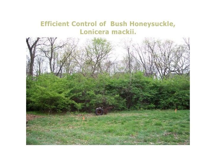 Efficient Control of Bush Honeysuckle,            Lonicera mackii.