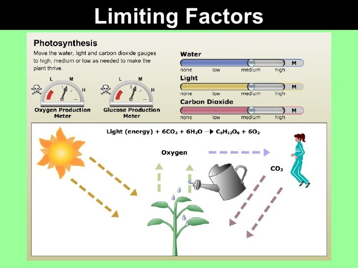what factors limit photosynthesis There are three main factors affecting photosynthesis and several blackman's experiments illustrate the concept of limiting factors another limiting factor is.