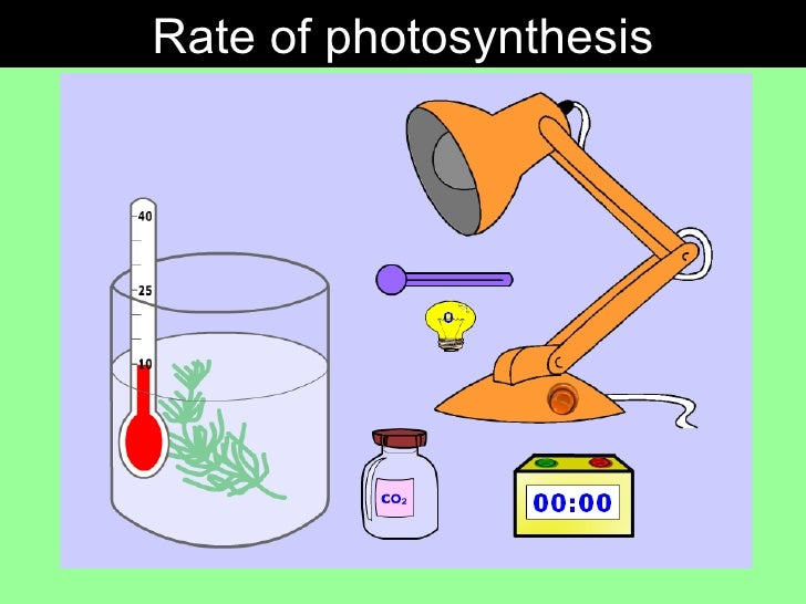 rate of photosynthesis The rate of photosynthesis in plants depends upon multiple factors, including temperature scientists measure photosynthesis rates by carbon dioxide release.