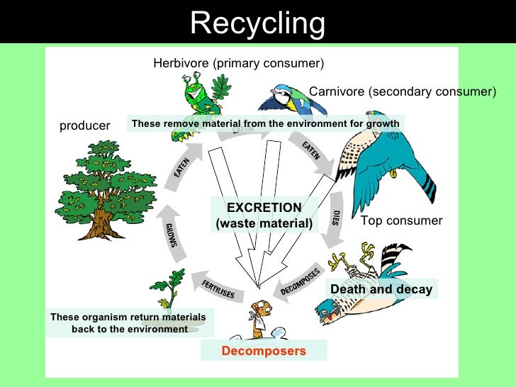 Gcse biology nutrient cycle ccuart Choice Image