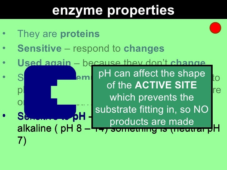 """enzyme gcse coursework A grade catalase coursework to investigate the effect of temperature on the rate of reaction of an enzyme """"catalase†by gcse biology aim to."""