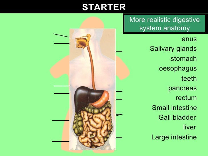 Gcse biology enzymes in digestion teeth salivary glands oesophagus gall bladder liver large intestine anus rectum small intestine pancreas stomach label ccuart Image collections