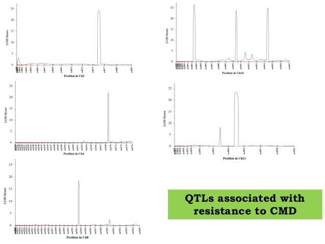 Pyramiding of QTLs for CMD