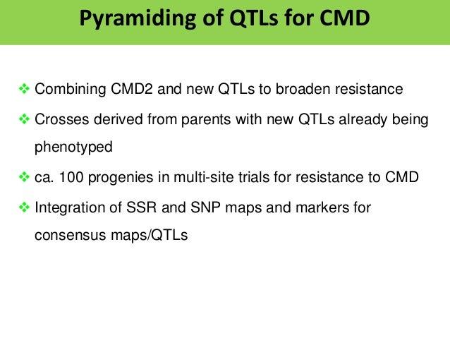 Validating QTLs for CBSD